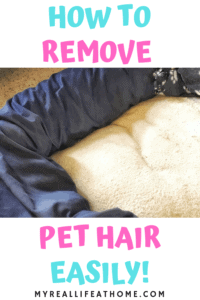 Clean blue and cream dog bed on carpet floor