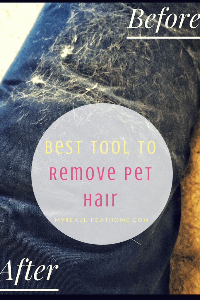 Cheap tool to remove pet hair #goodbyepethair #howotremovedoghair #getridofdoghair